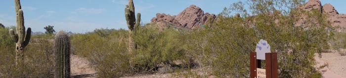 desert photo1